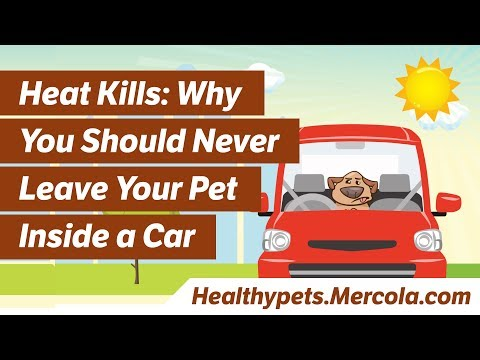 Heat Kills: Why You Should Never Leave Your Pet Inside a Car