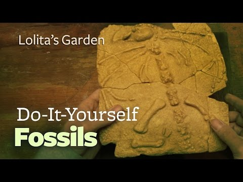 Do It Yourself Fossils