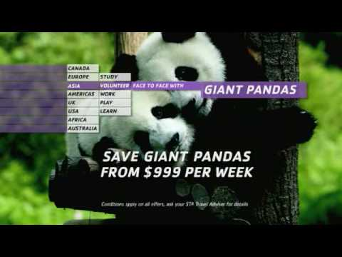 STA Travel Save the Giant Panda in China