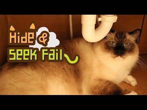 Cat Opens Door (Hide & Seek Fail)