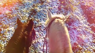 Лошади Яны Шаниковой заряжают радостью и счастьем в любую погоду!