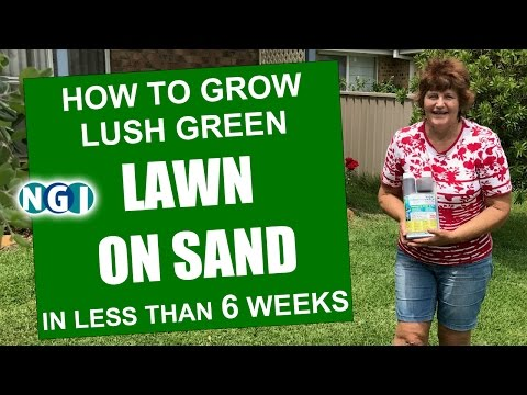 How To Grow Lush Green LAWN ON SAND in 6 weeks