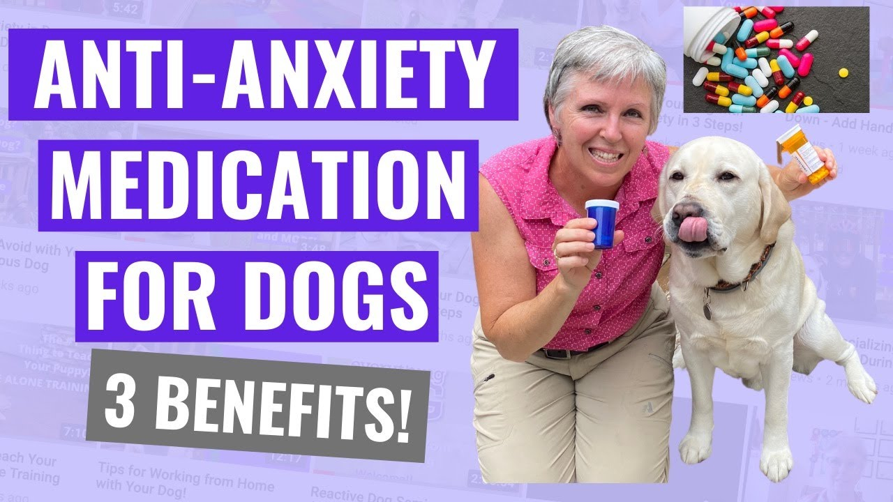 Anti-Anxiety Medication for Dogs - 3 Benefits!