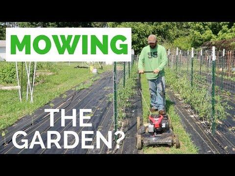 Garden Day! STOP Mowing the Garden and Tomato Chores!!