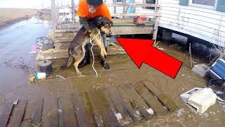 Download RESCUING 30+ Dogs from DANGEROUS Flood (EMOTIONAL) Video