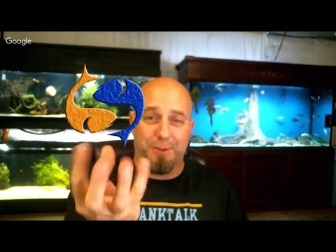 New Fishroom Build!!! Plus Some Q&A! Tank Talk Live Pres. By KGTropicals!!