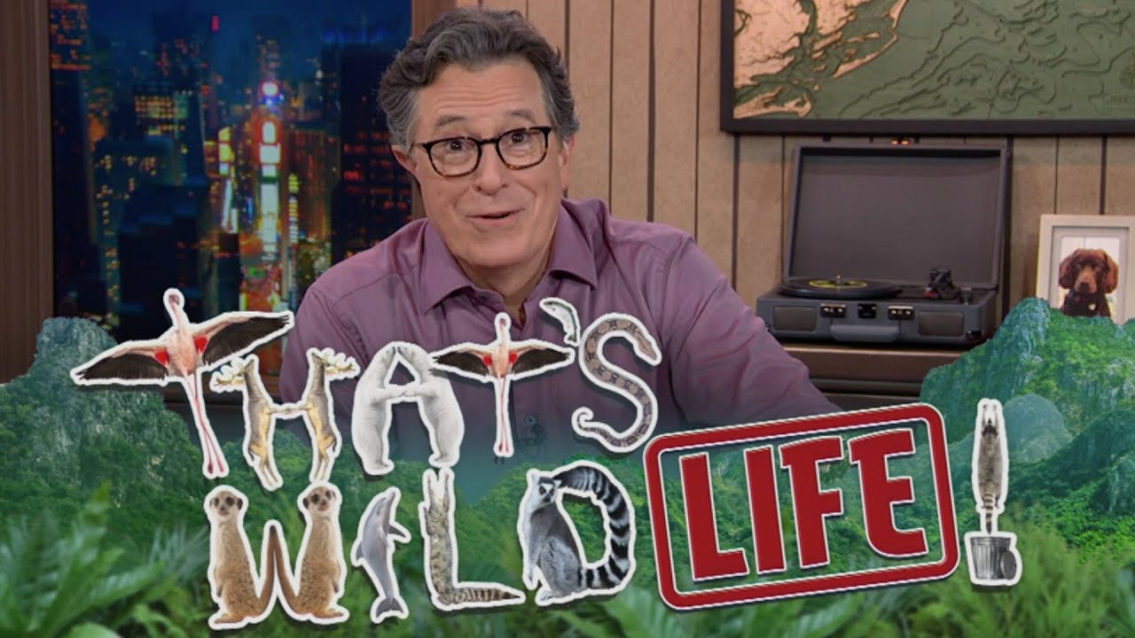 "Meet Big Cats And Crazy Birds On Stephen Colbert's ""That's Wild!... Life"""