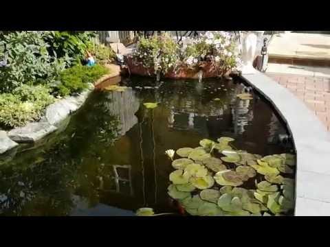 Tel's New Pond Update