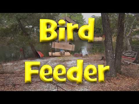 ASMR Bird Feeder Close Up