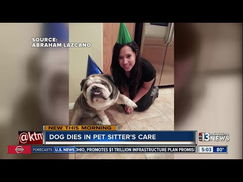 Dog dies in pet sitter's care