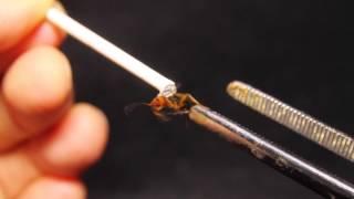 Bombardier Beetle Test Fire