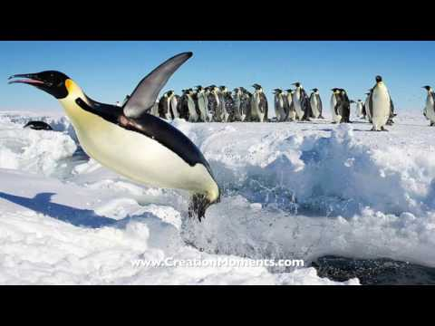 Penguins with Sunglasses (Part 2 of 2)