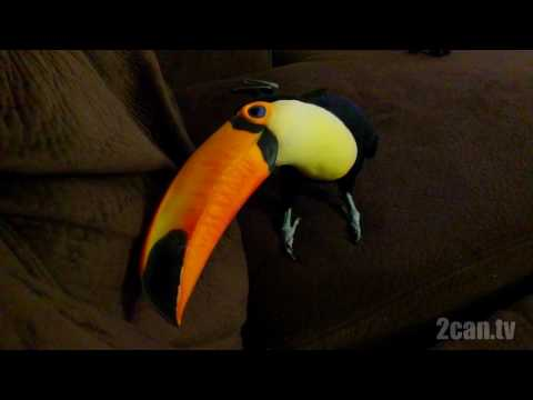 Toucan is so mischievous!