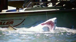 BIG 9 Foot Sand Tiger Shark Caught in the Delaware Bay  - Shark Fishing 2011
