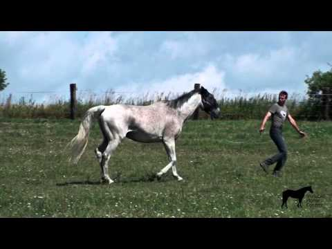 What to do if your horse doesn't want to leave his buddies