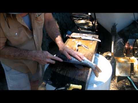 Largemouth Bass--Cleaning Method
