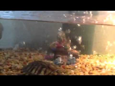 Air Injection Technology for Aquariums in a 55 Gallon tank with turtles.
