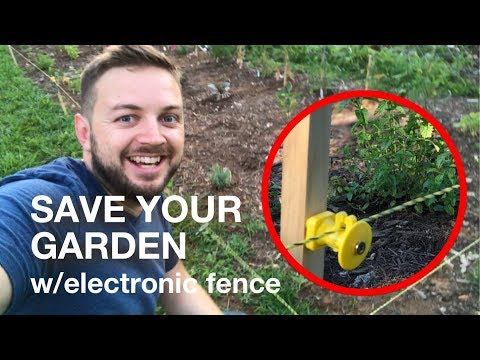 ⚡🐓  How I saved my garden from my vicious chickens with a small electric fence 🍗
