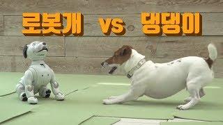 로봇개는 진짜 강아지와 친구가 될수 있을까??? 강아지 행동전문가가 바라본 로봇개를 대하는 강아지의 반응