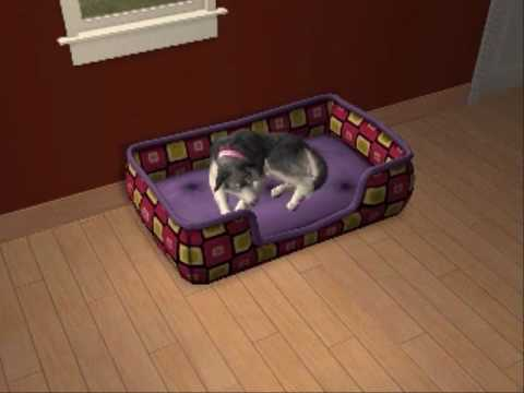 Sims 2 pets stories