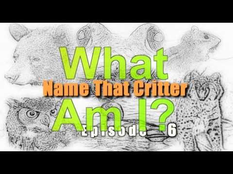 NAME THAT CRITTER Episode 6