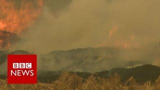 Delhi smog: Crop-burning adds to pollution - BBC News