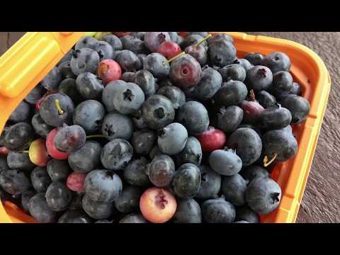 How to make blueberry sauce