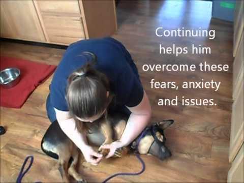 Aggressive Dog Nail Trimming