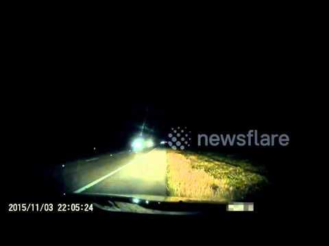 Car hits large alligator on Florida road