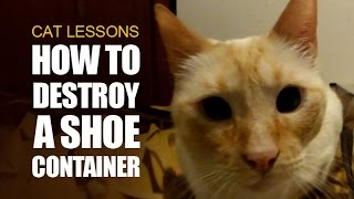 How to Destroy a Shoe Container