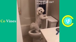 Try Not To Laugh Watching Patrick Barnes Quincy Vines | Funny Patrick Barnes Videos 2021