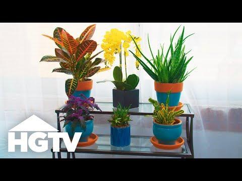 How to Keep Your Houseplants Alive - Way to Grow - HGTV