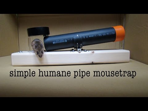 How to Make ● a Simple Tube Mousetrap  ( that works ! )