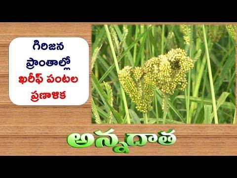 Kharif Crops for Srikakulam Agency || ETV Annadata