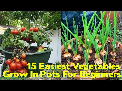 15 Easiest Vegetables To Grow In Pots For Beginners