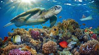 "[NEW] 11HRS Stunning 4K Underwater Footage + Music   Rare & Colorful Sea Life: ""RAINBOW REEF 2"" UHD"