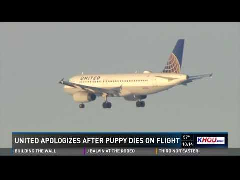 United Airlines apologizes after puppy dies on flight