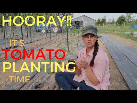 Planting Our FAVORITE Garden Veggie...TOMATOES!!!!