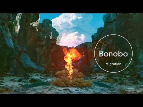 Bonobo : Migration