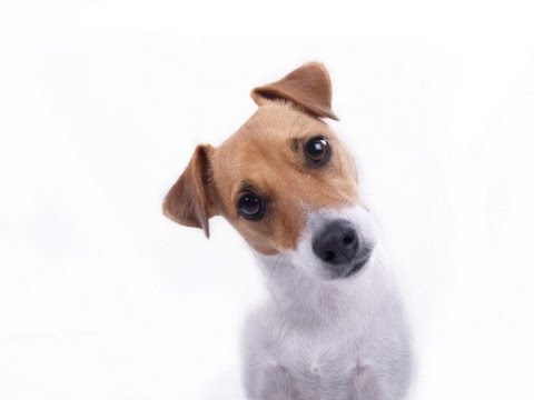 Dog Training: How to Train Your Puppy - Thriving Canine