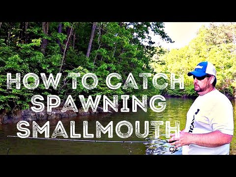 Find and Catch Spawning Smallmouth