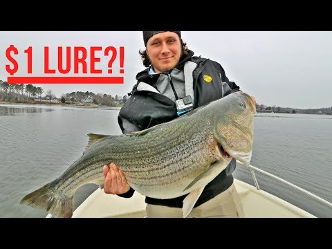 $1 Lure Catches MULTIPLE Fish Of A Lifetime?! NET BREAKING Citation Striped Bass On Light Tackle!!