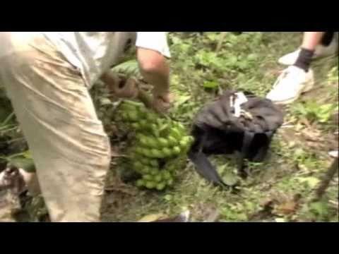 Montserrat's Bottomless Ghaut Hike