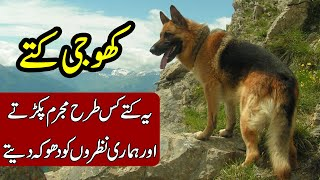 REALITY BEHIND SEARHC DOGS | KHOJI KUTTE | KHOJI TV