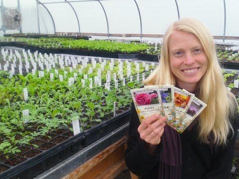Beginning Gardening: Flower Seeds to Direct Sow