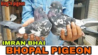 EMRAN BHAI KE HIGH FLYER PIGEON .BHOPAL