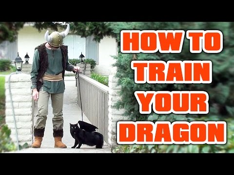 Cat Cosplay! HOW TO TRAIN YOUR DRAGON