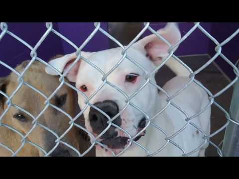 The Humane Society of Southern Arizona Doggies Adoptable 5-8-18 Fantasia-Fjord&Lucy-Paddy-Wyatt