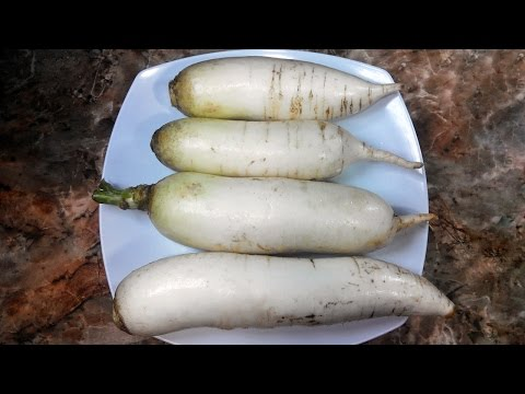 Why must eat this veggie! How to cooking Radish! Daikon recipes!