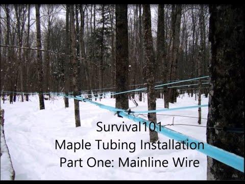 Maple Mainline Installation